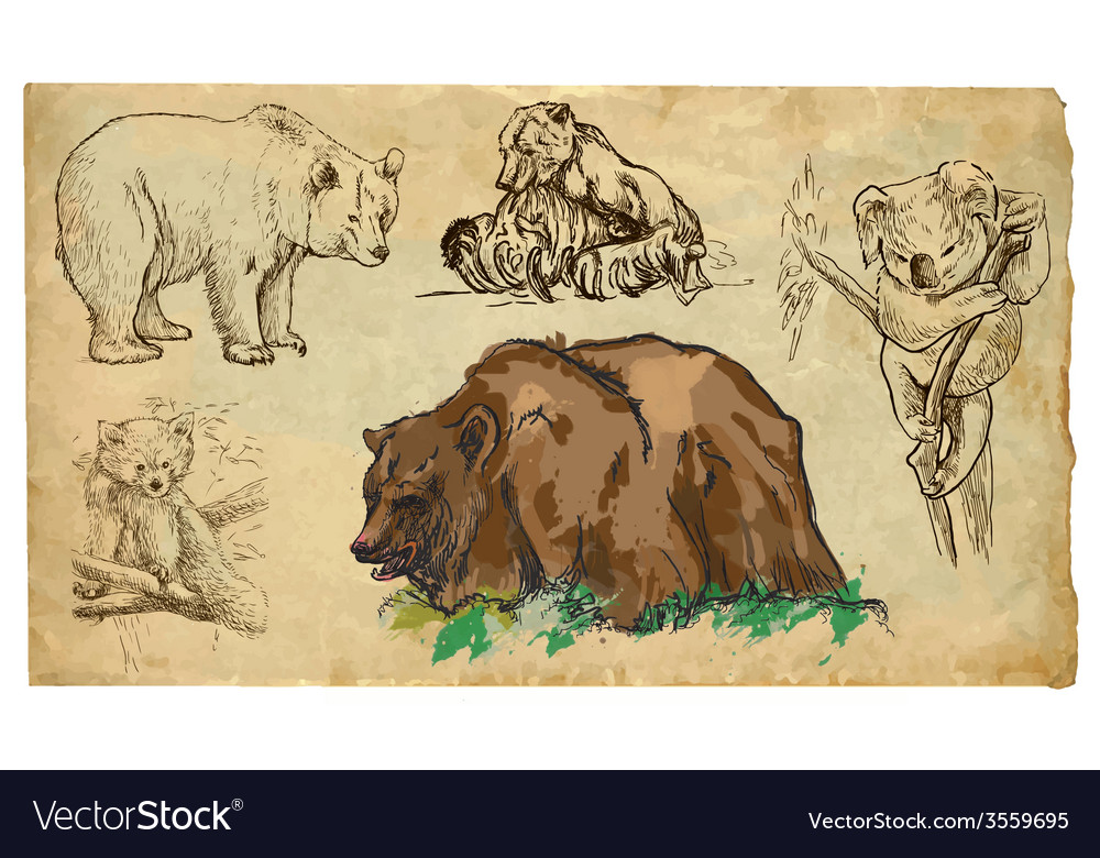 Animals theme bears - hand drawn pack vector | Price: 3 Credit (USD $3)