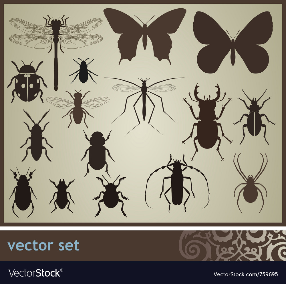Insect set vector | Price: 1 Credit (USD $1)