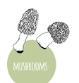 Set with black and white mushrooms vector