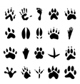 Collection of 20 animal and human footprints vector
