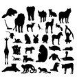 Animals white background 23 vector
