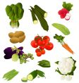 Indian vegetables vector