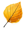 Autumn leaf isolated on white plus eps10 vector