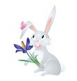 grey hare with flower vector