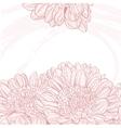 Line drawings pink chrysanthemum grunge background vector