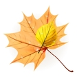Autumn leaf isolated on white plus eps10 vector