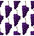 Seamless pattern of bunches of purple grapes vector