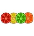 Bright citrus slices vector