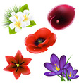 Set of realistic flowers vector