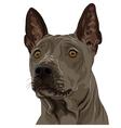 Thai ridgeback dog breed vector