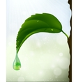 Green leaf with a drop of flowing vector