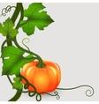 Pumpkins background vector