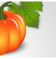 Pumpkins backdrop vector