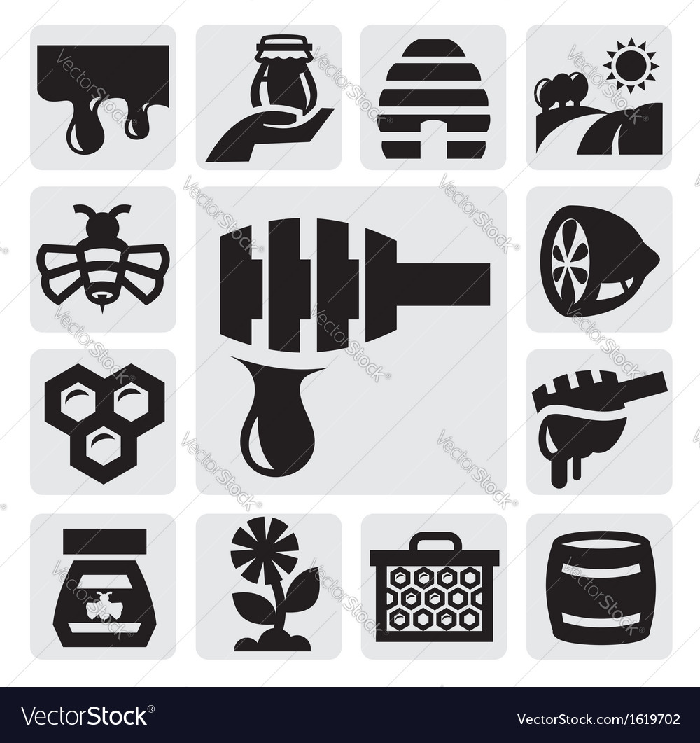 Honey icon vector