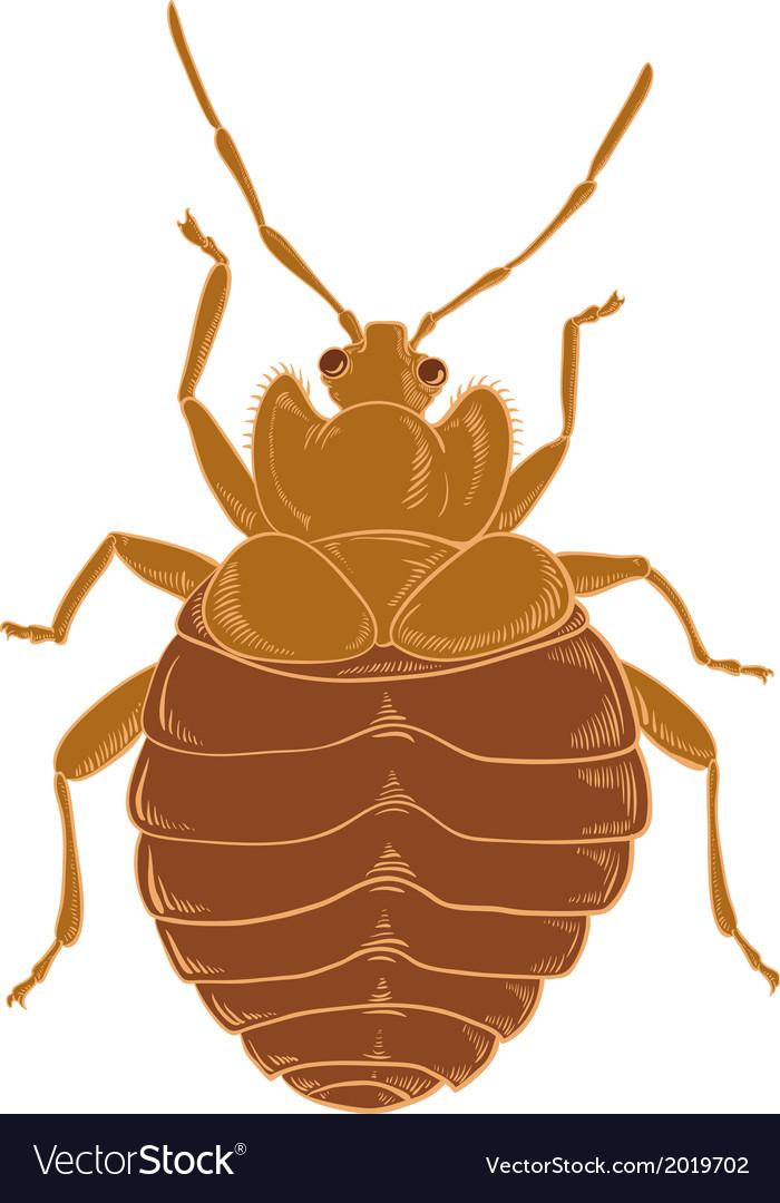 Orange bedbug vector | Price: 1 Credit (USD $1)
