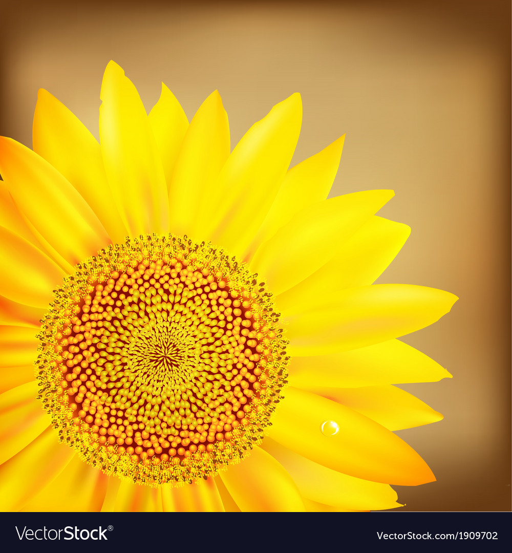 Vintage sunflower and old paper vector   Price: 1 Credit (USD $1)