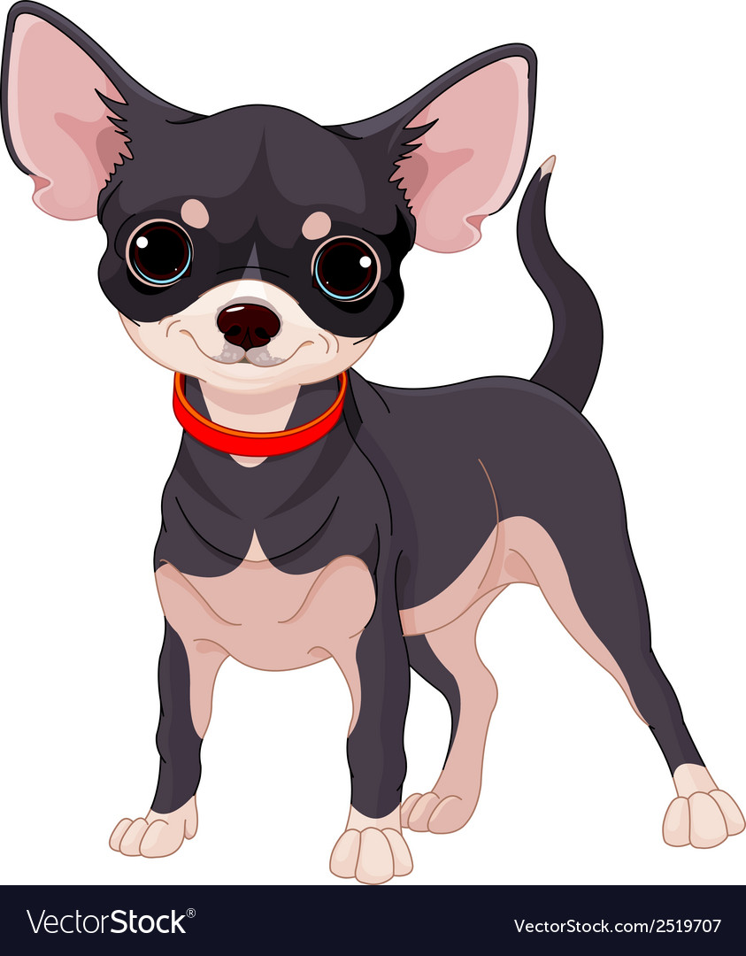 Chihuahua vector | Price: 1 Credit (USD $1)