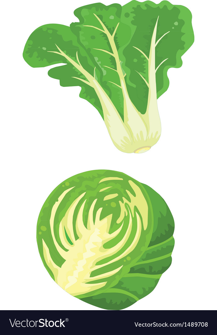 Cabbage and vegetables vector | Price: 1 Credit (USD $1)