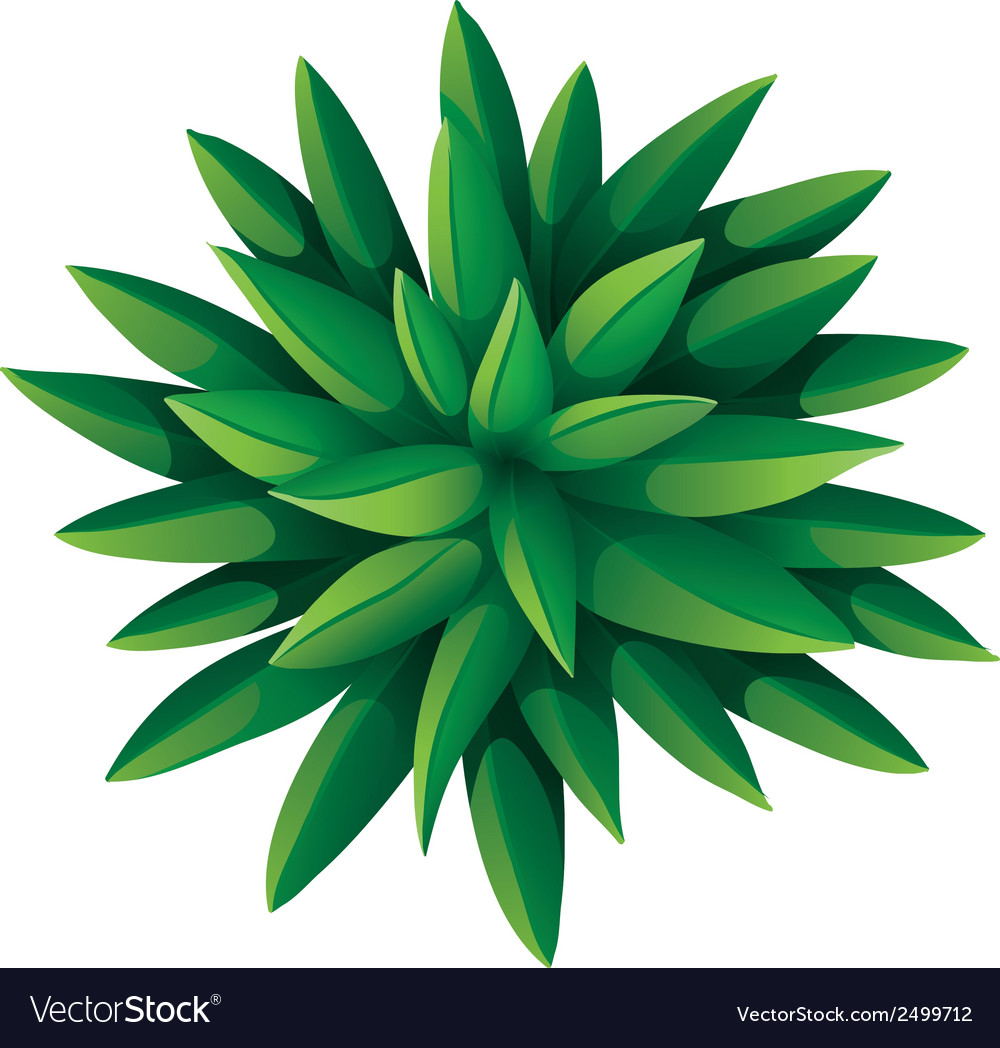 A topview of a green landscaping plant vector | Price: 1 Credit (USD $1)