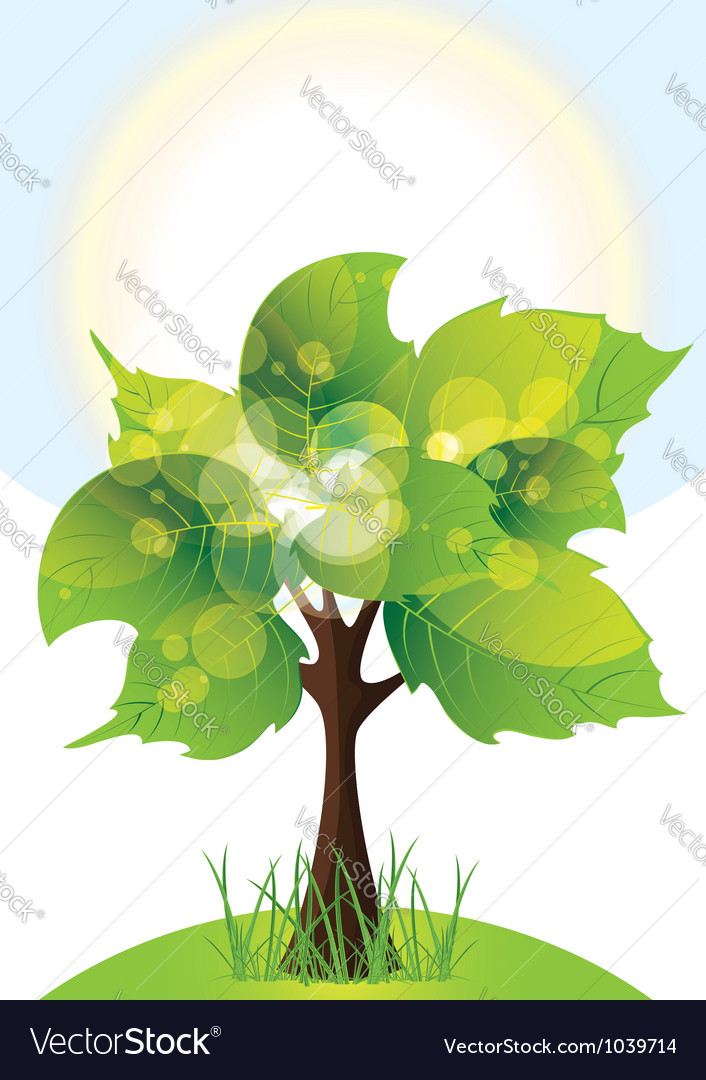 Tree with lush green foliage sunny day vector | Price: 1 Credit (USD $1)