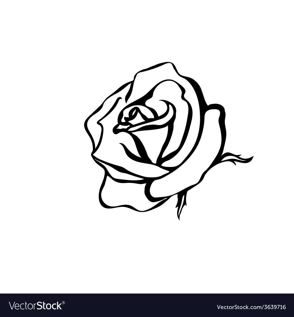 Rose sketch vector | Price: 1 Credit (USD $1)