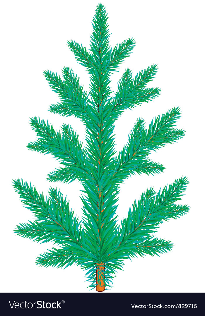 Spruce vector | Price: 1 Credit (USD $1)
