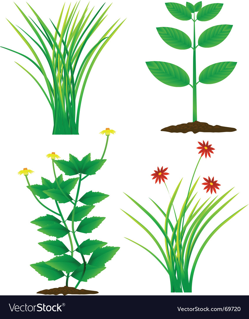 Grass and plants vector | Price: 1 Credit (USD $1)