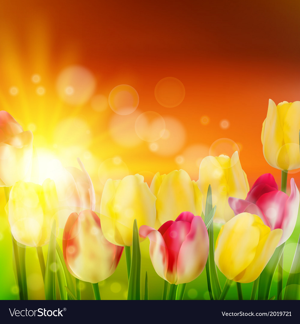 Tulip field during sunset eps 10 vector | Price: 1 Credit (USD $1)