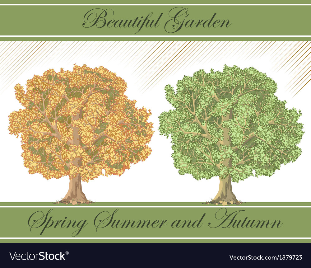 Spring and autumn detailed trees vector | Price: 1 Credit (USD $1)