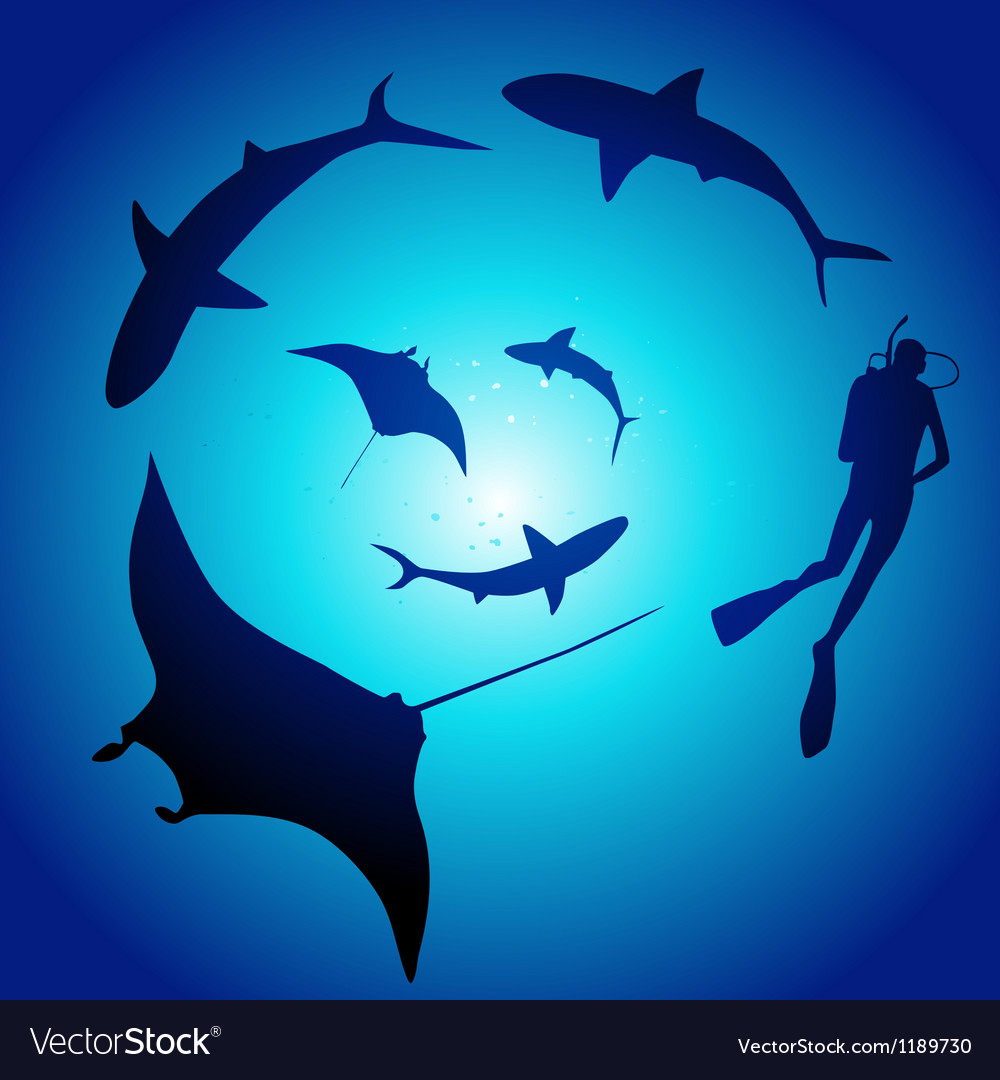 Shark and diver swimming with sharks vector   Price: 1 Credit (USD $1)