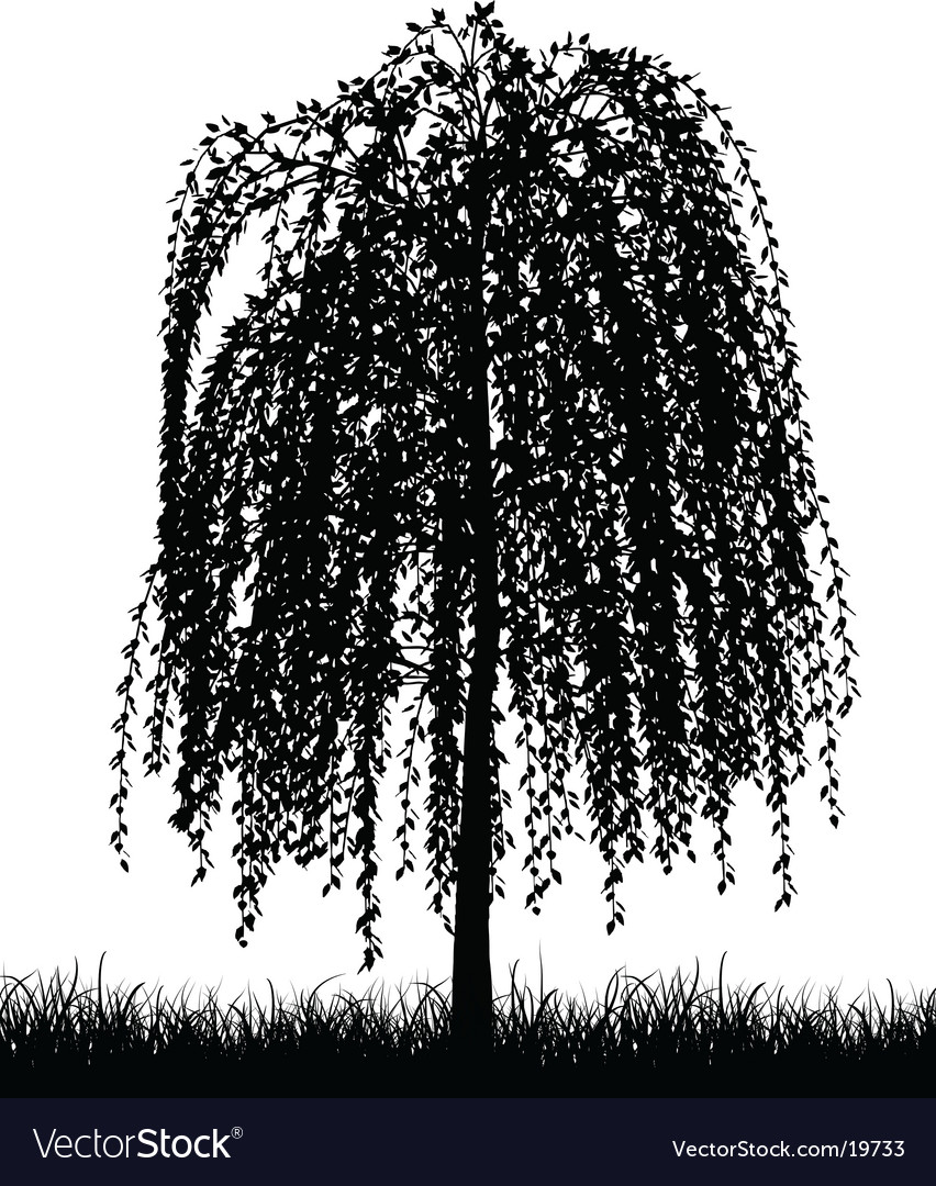 Weeping willow tree vector | Price: 1 Credit (USD $1)