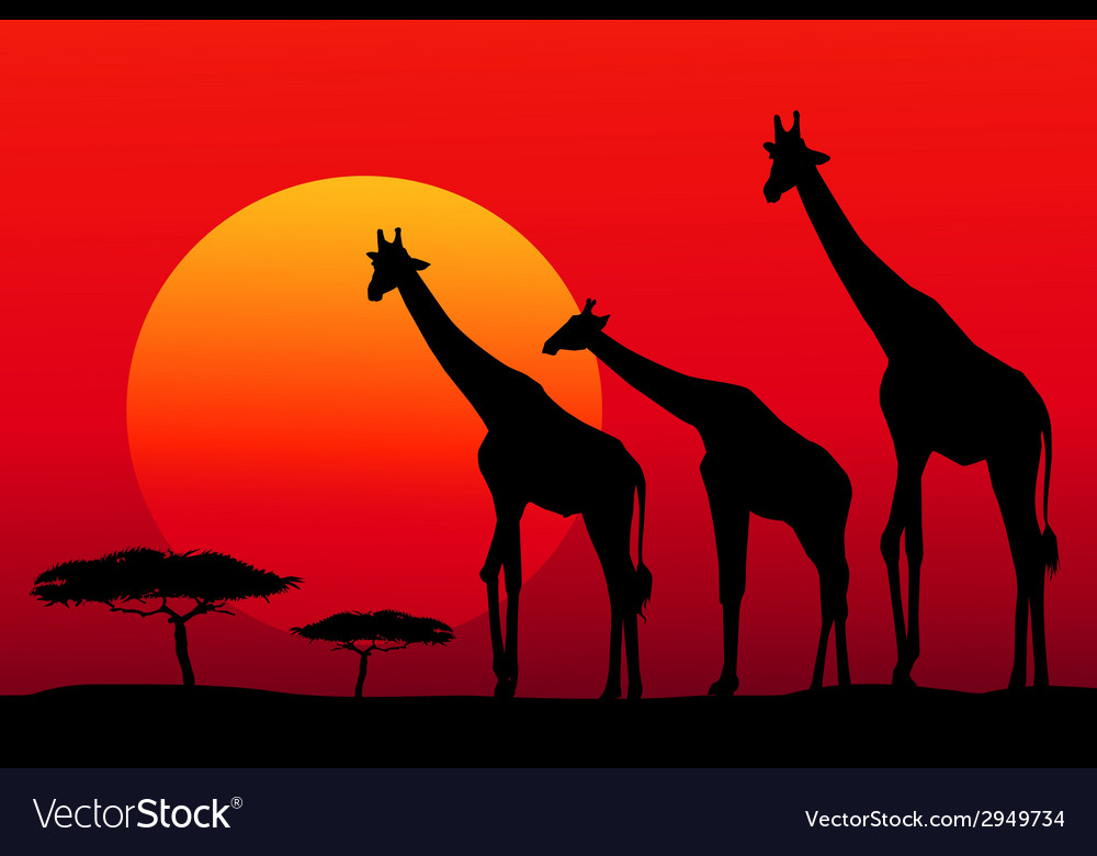 African safari at sunset vector | Price: 1 Credit (USD $1)