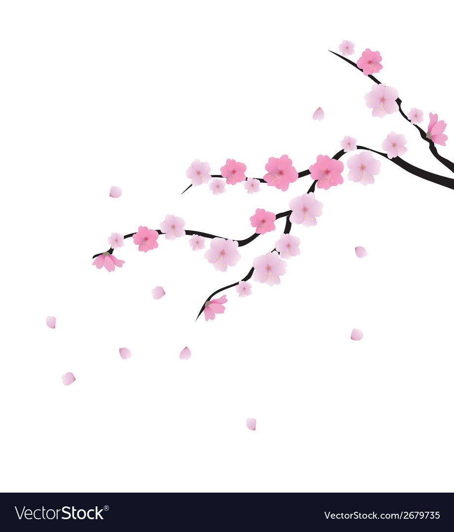 Blooming cherry 1 vector | Price: 1 Credit (USD $1)