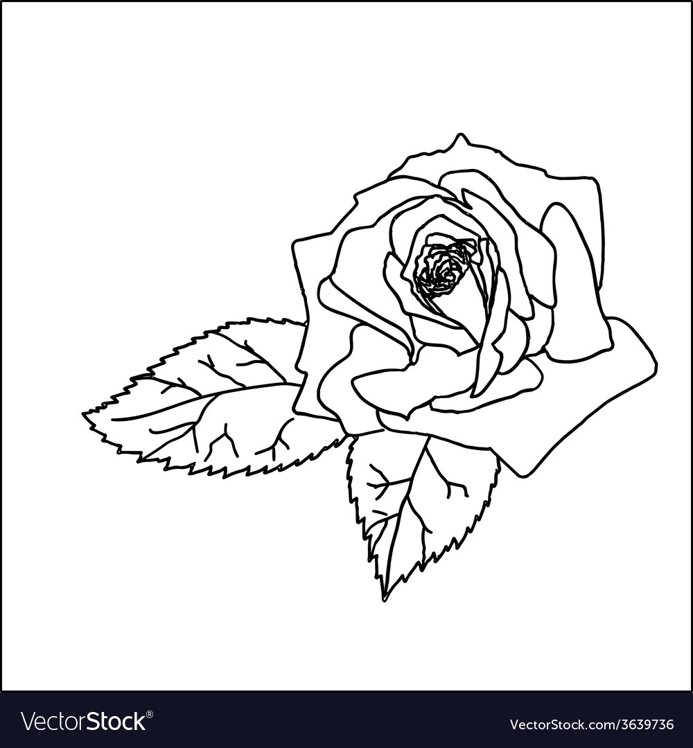 Rose sketch vector | Price: 1 Credit (USD $1)