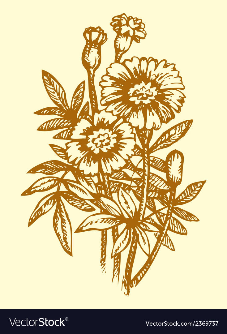 Bright yellow flowering tagetes vector | Price: 1 Credit (USD $1)