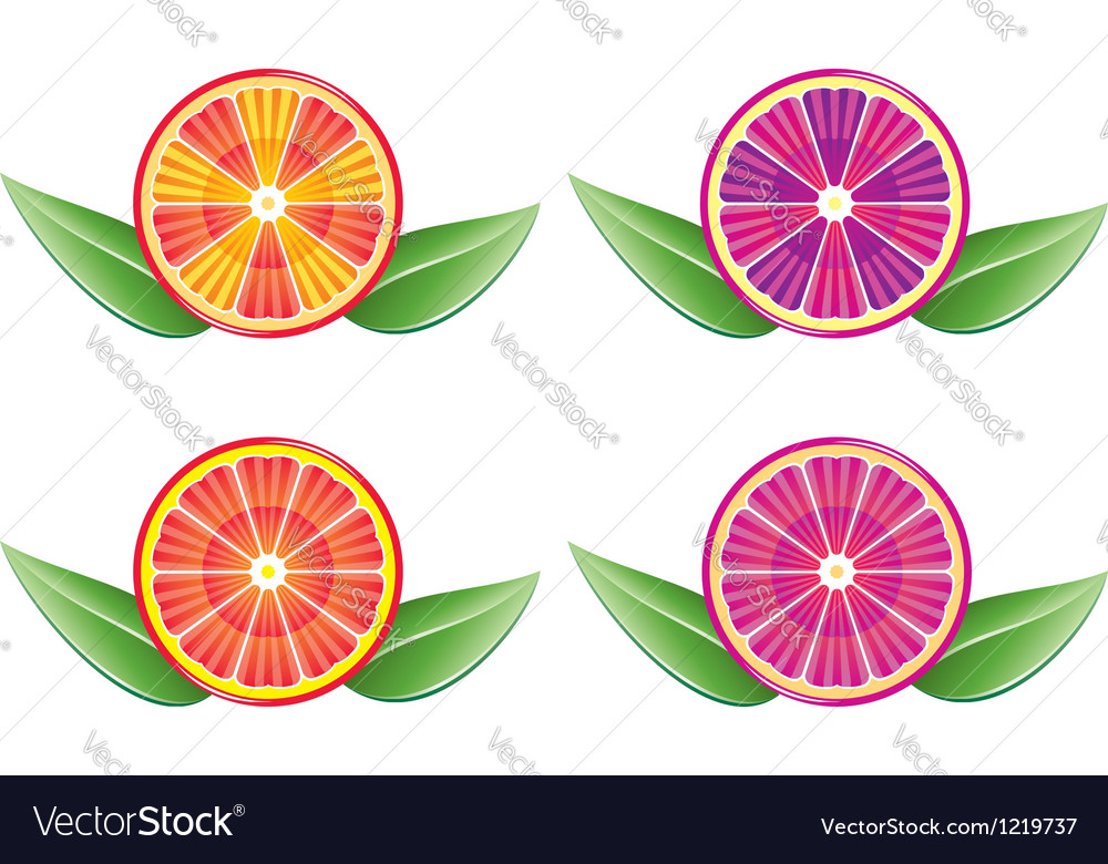 Citrus slices vector | Price: 1 Credit (USD $1)