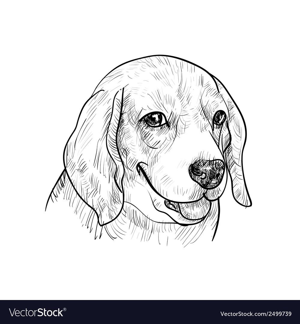 Beagle vector   Price: 1 Credit (USD $1)