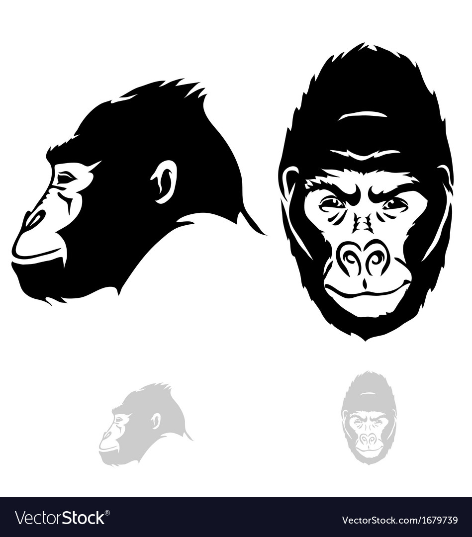 Stylized gorilla head vector | Price: 1 Credit (USD $1)