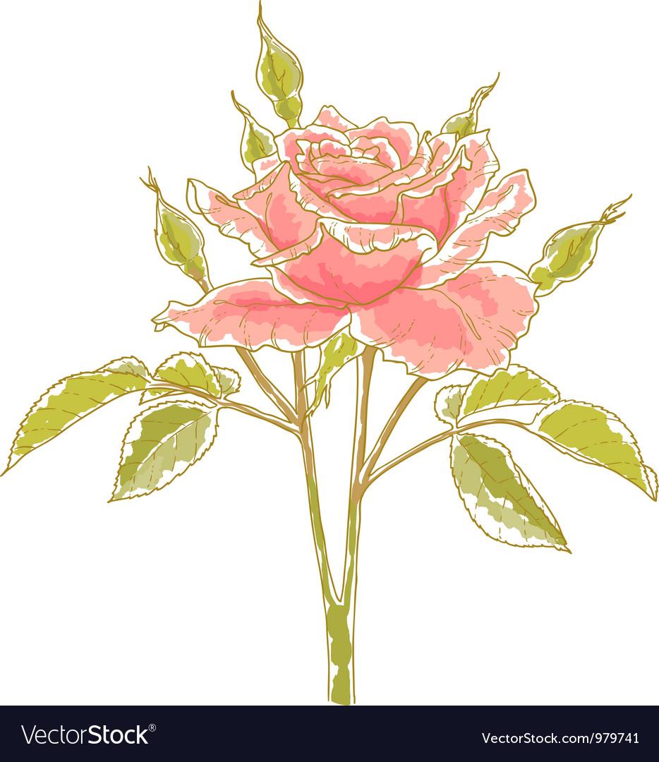 Pink rose vector   Price: 1 Credit (USD $1)