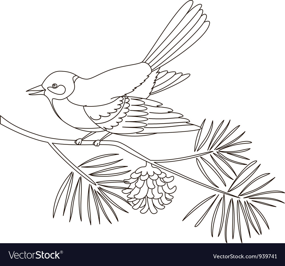Titmouse on a pine branch vector