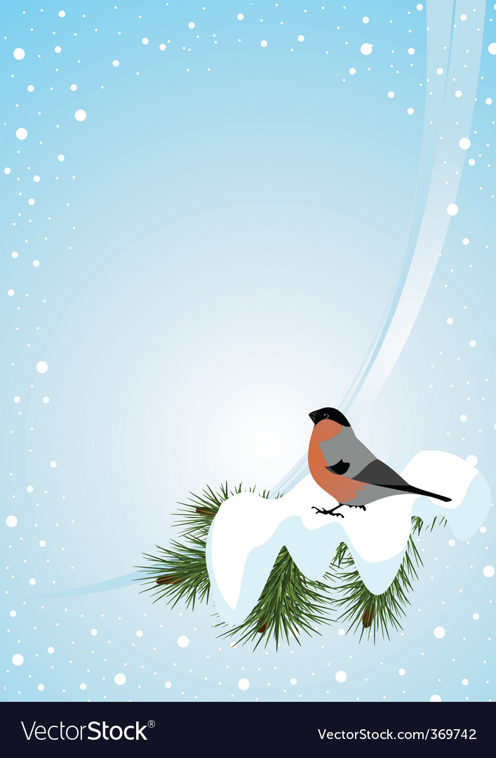 Bullfinch vector | Price: 1 Credit (USD $1)