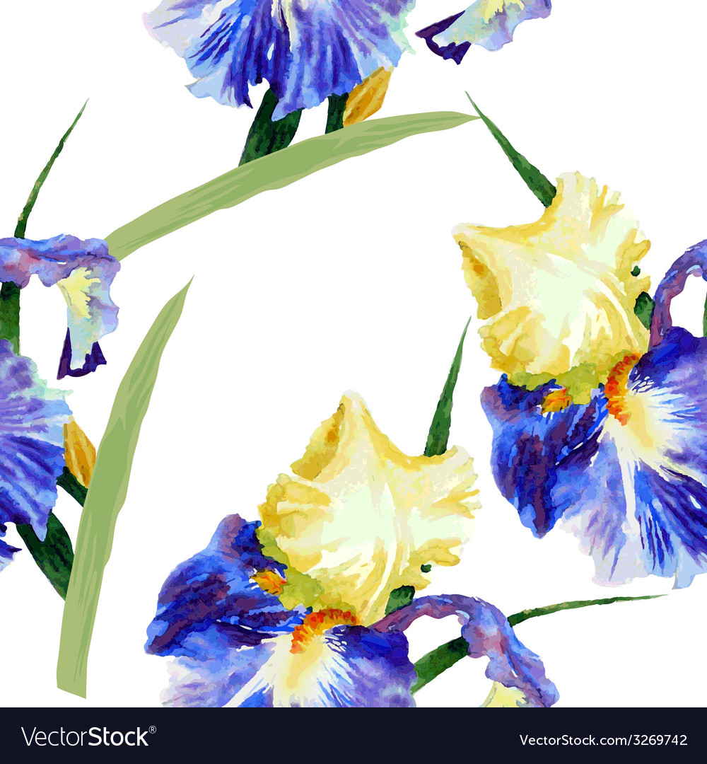 Seamless pattern with watercolor irises-02 vector | Price: 1 Credit (USD $1)