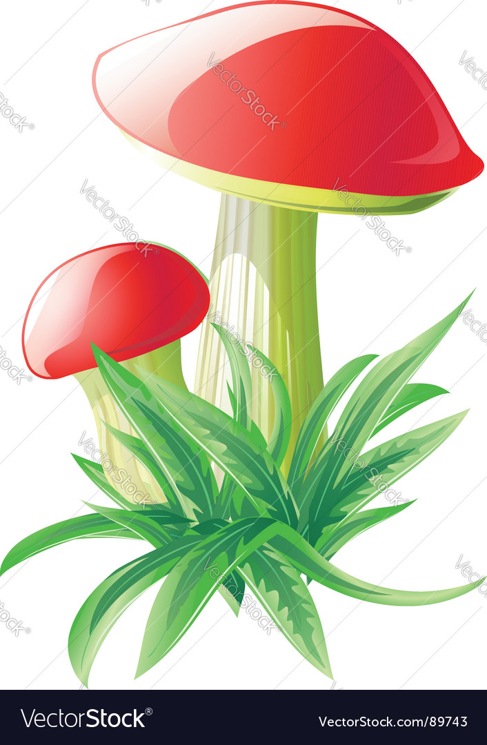 Mushrooms nature symbol vector | Price: 1 Credit (USD $1)