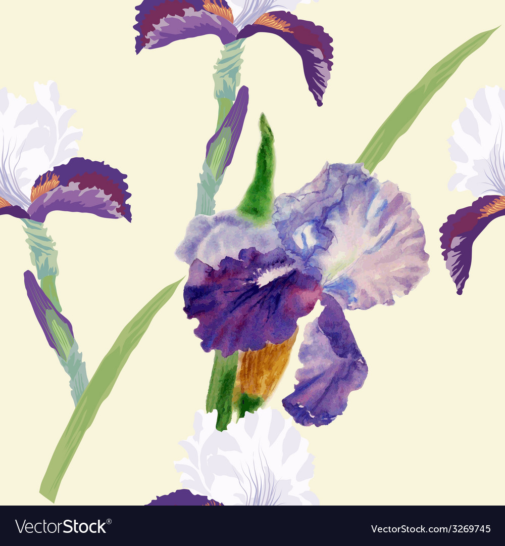Seamless pattern with watercolor irises-03 vector | Price: 1 Credit (USD $1)