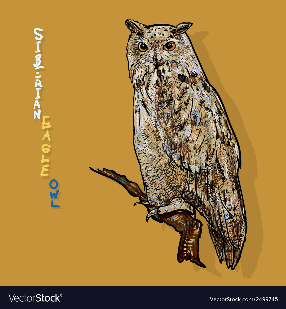 Siberian eagle owl or bubo bubo sibiricus vector | Price: 1 Credit (USD $1)