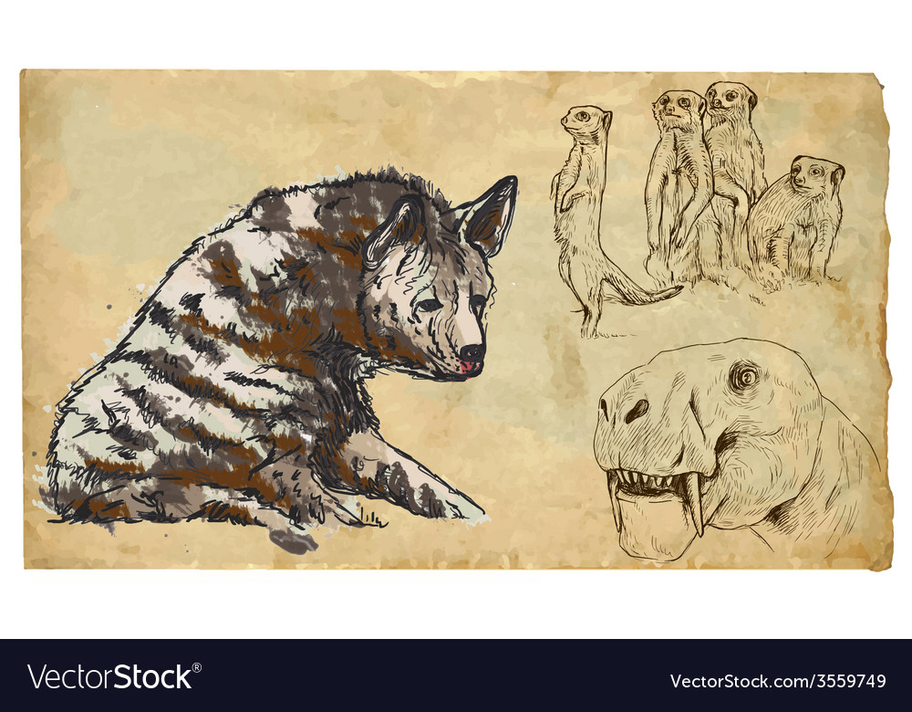 Animals theme feliformia - an hand drawn pack vector | Price: 3 Credit (USD $3)