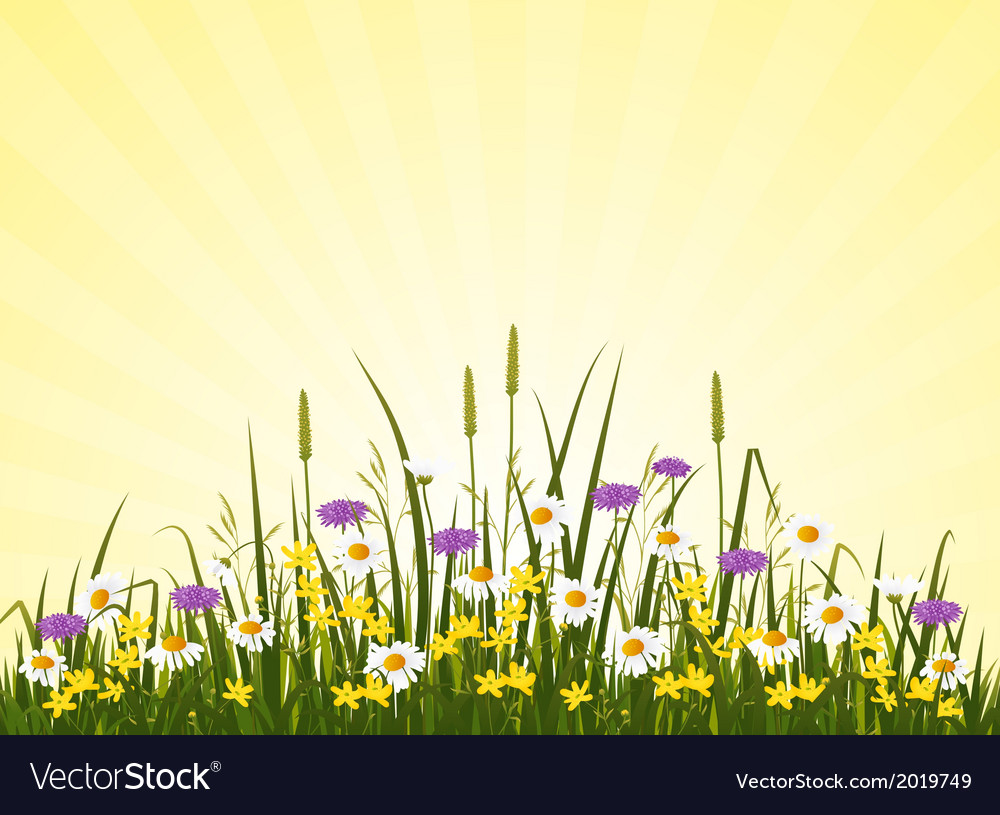 Wild flower meadow vector | Price: 1 Credit (USD $1)