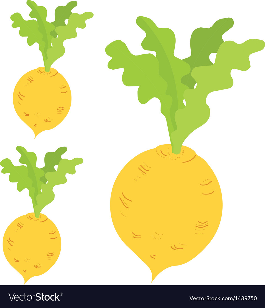 Radish vector | Price: 1 Credit (USD $1)