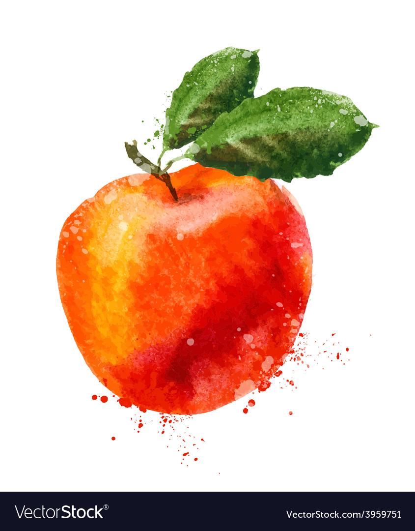 Fruit logo design template peach or apple vector | Price: 1 Credit (USD $1)