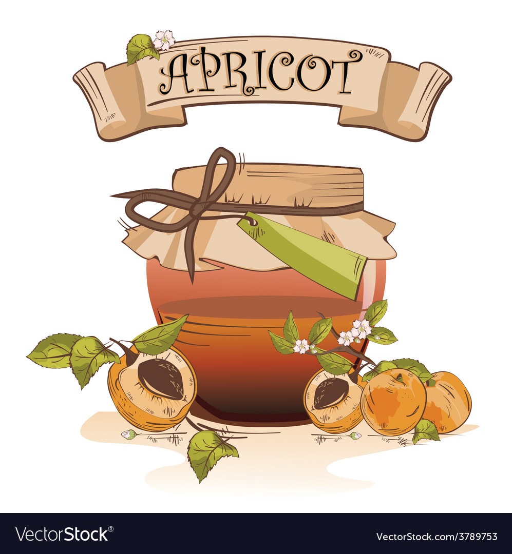 Apricot banner vector | Price: 1 Credit (USD $1)